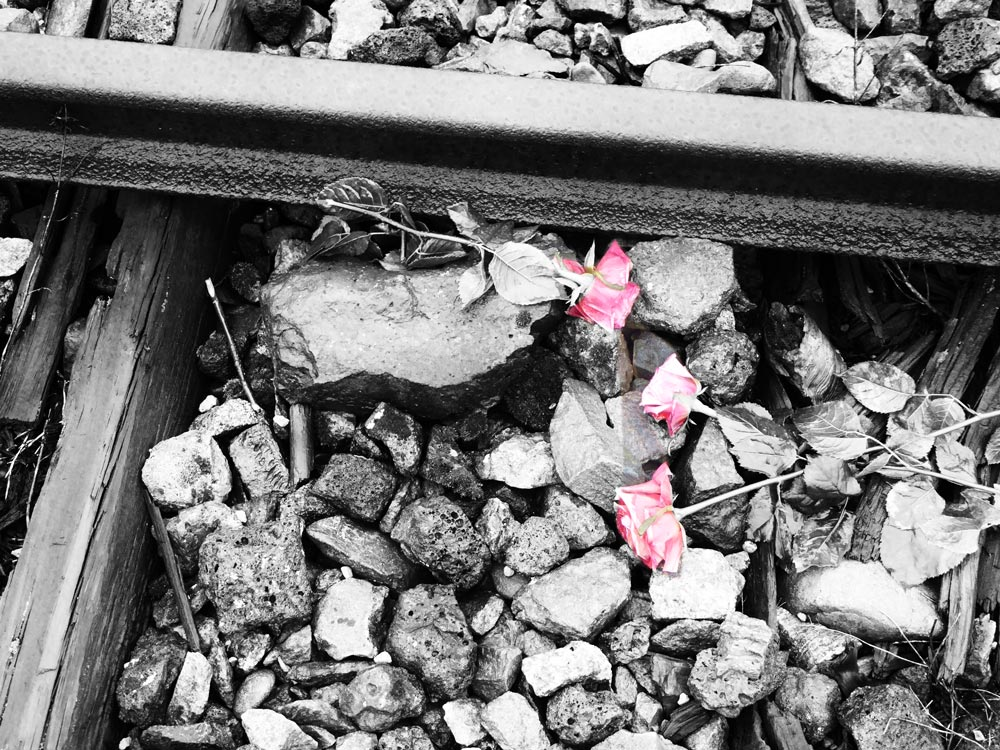 flowers on a railway track at auschwitz