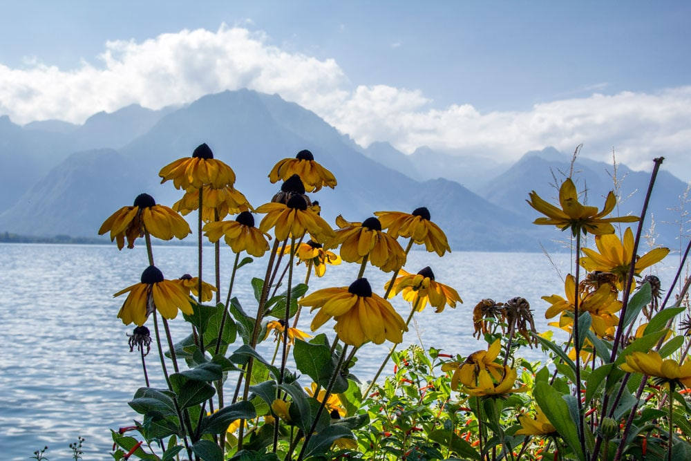 yellow flowers at side of lake