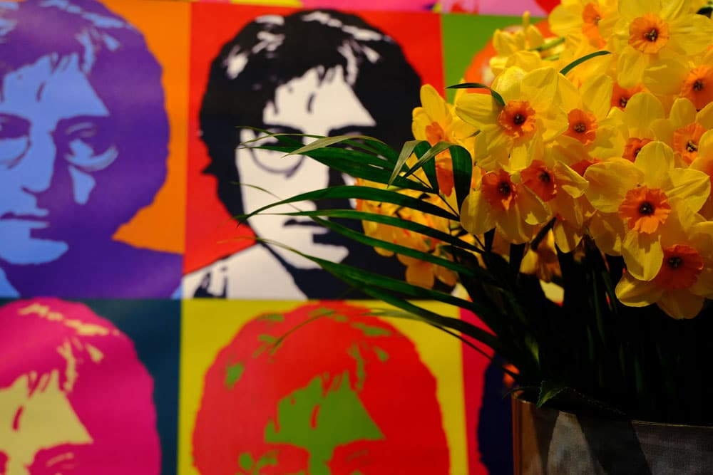 display of daffodils in front of pictures of john lennon