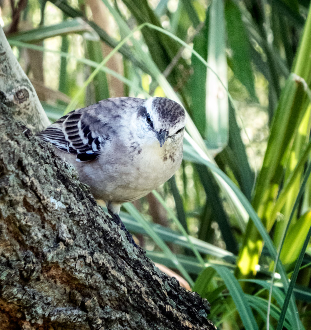 grey and white bird sitting on tree