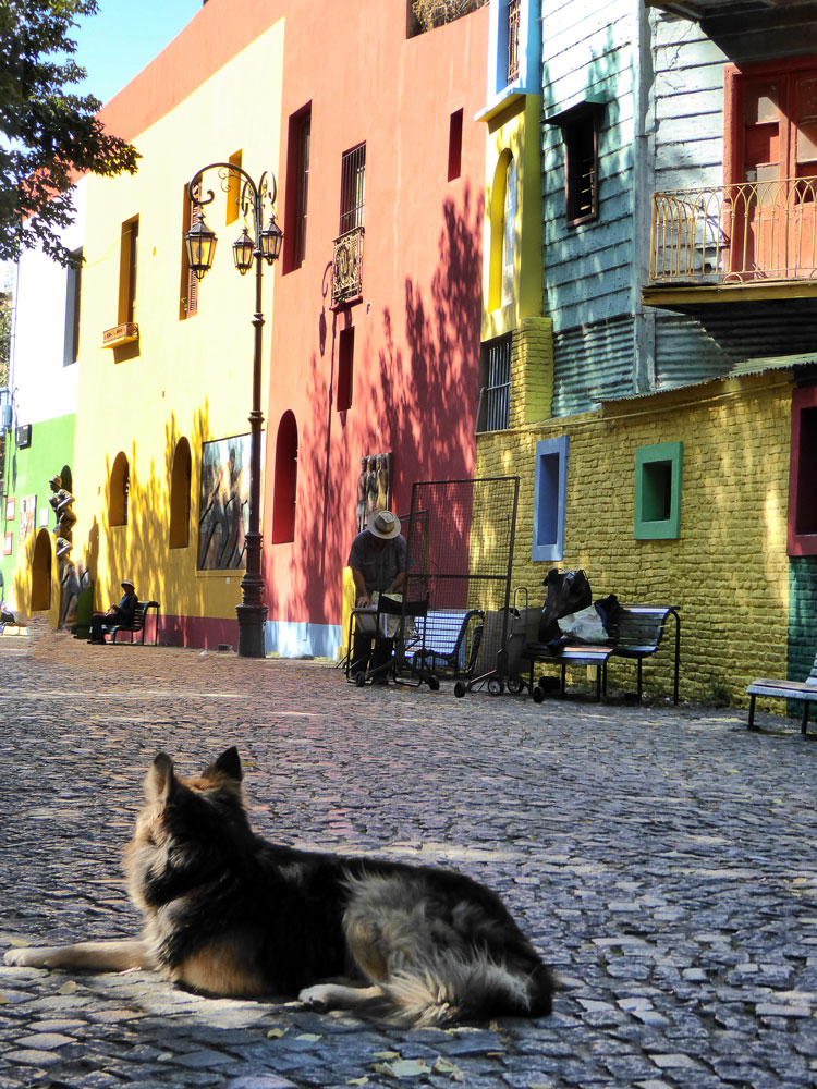 dog resting in street of brightly coloured buildings in buenos aires