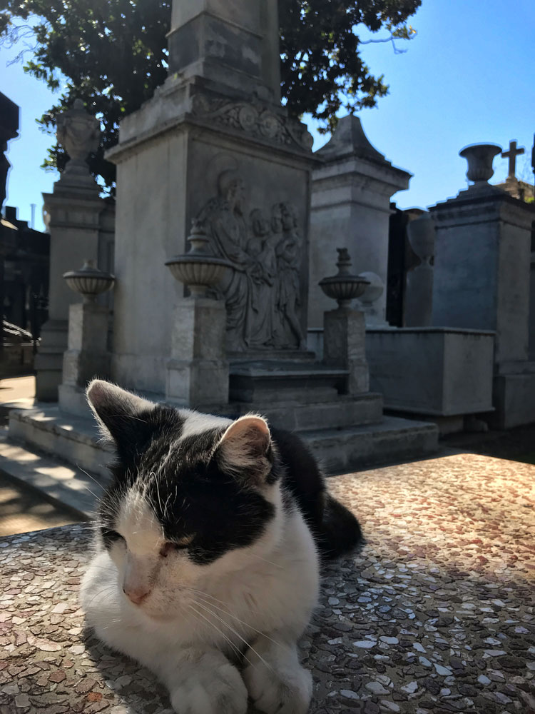 cat resting in a cemetery in the sunlight