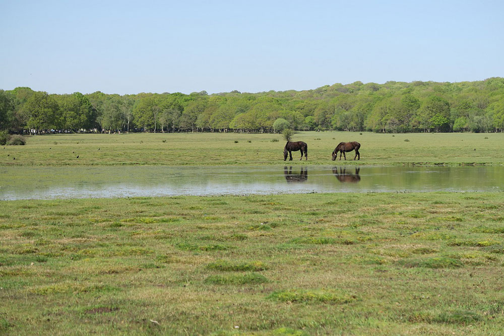 2 horses grazing in field reflected in still water