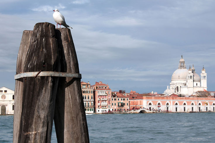 pigeon-perching-on-post-overlooking-guidecca-canal-in-venice