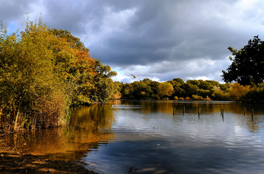 autumn colours on lake in epping forest