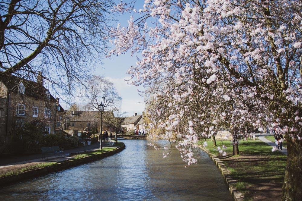 spring blossom on river in bourton on the water
