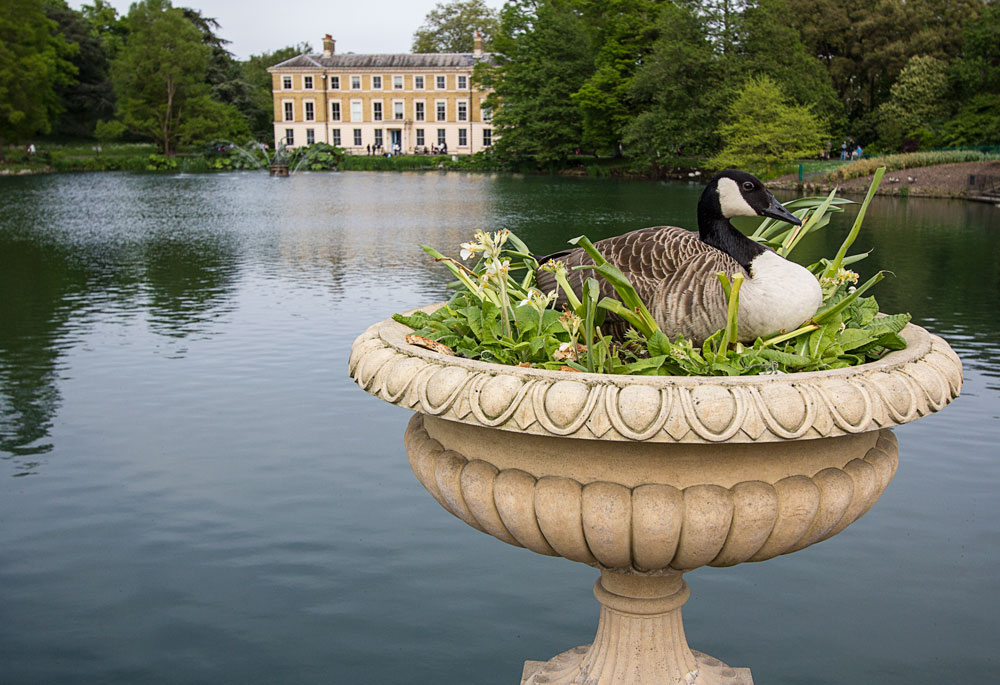 duck sitting on flower planter in front of lake in kew gardens london